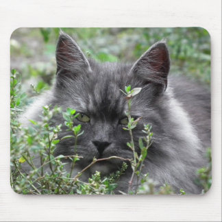 Siberian | Cat Portrait Mouse Pad