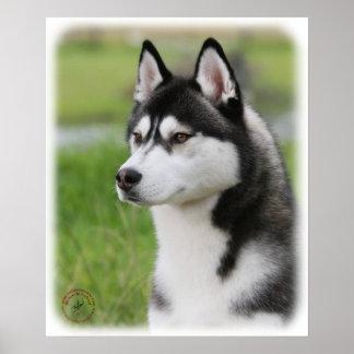 Siberian Husky 9Y570D-006 Poster