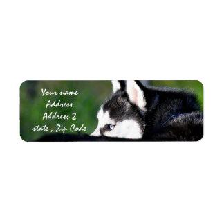 Siberian Husky Address labels