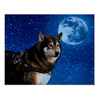 Siberian husky and the Blue Moon Poster