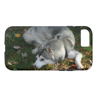 Siberian Husky at Rest iPhone 8/7 Case
