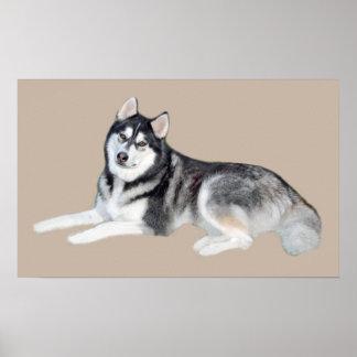 Siberian Husky Beautiful Print