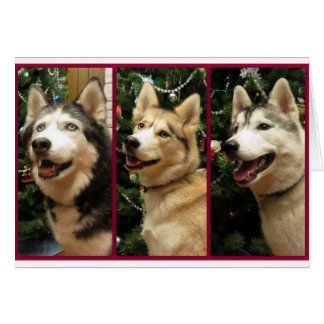 Siberian Husky Christmas Holiday Card