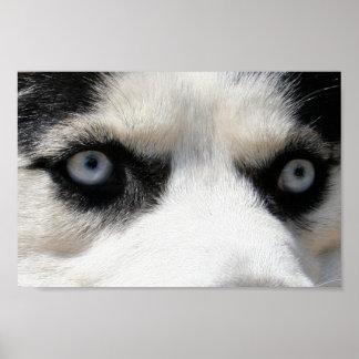 Siberian Husky Demon 3 Poster