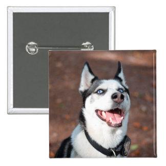 Siberian Husky dog blue eyes 2 Inch Square Button