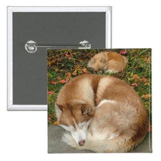 Siberian Husky & German Klein Spitz Pomeranian 2 Inch Square Button