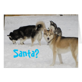 Siberian Husky Holiday Christmas Card