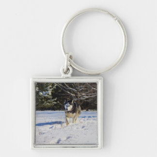Siberian Husky In The Snow Silver-Colored Square Keychain