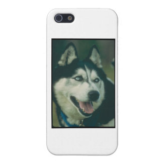 Siberian Husky iPhone 5/5S Covers