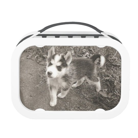Siberian Husky lunch box by DAL