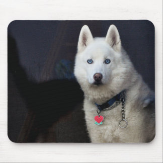Siberian Husky Photo Mouse Pad
