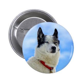 Siberian husky portrait 2 inch round button