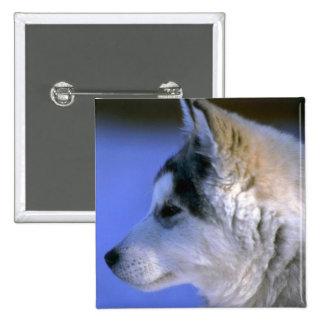 Siberian Husky pup Pin