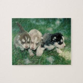 Siberian Husky Puppies Dog Puzzle