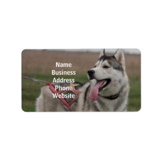 Siberian Husky sled dog Label