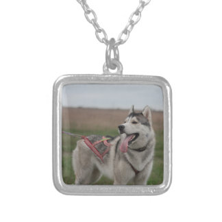 Siberian Husky sled dog Square Pendant Necklace