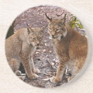 Siberian Lynx Coaster