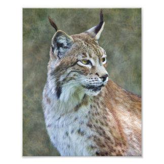 Siberian Lynx Print