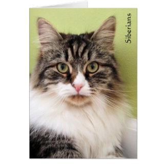 Siberian Magic Note Cards