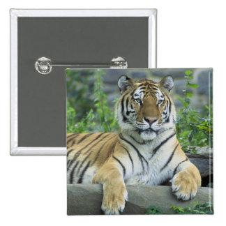Siberian Tiger 2 Inch Square Button