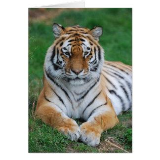 Siberian Tiger Card