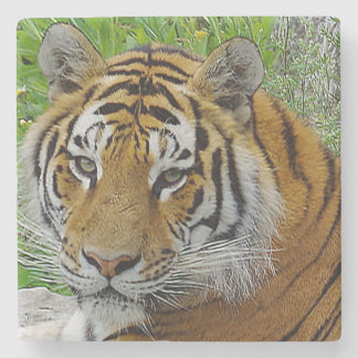 Siberian Tiger Closeup Photo of Face Stone Coaster