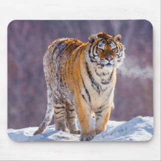 Siberian tiger in snow, China Mouse Pad