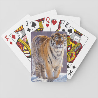 Siberian tiger in snow, China Poker Deck
