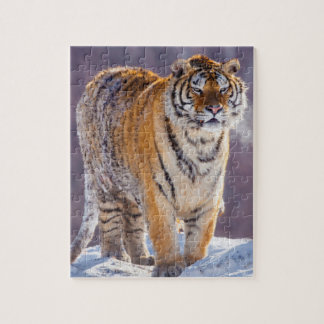 Siberian tiger in snow, China Puzzle