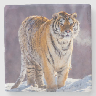 Siberian tiger in snow, China Stone Coaster