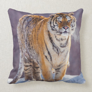 Siberian tiger in snow, China Throw Pillow
