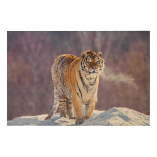 Siberian tiger in snow, China Wood Wall Art