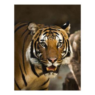 Siberian Tiger Letterhead