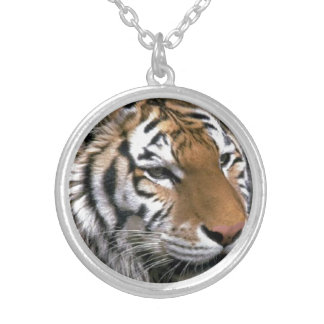 Siberian Tiger Lovers Silver Plated Necklace