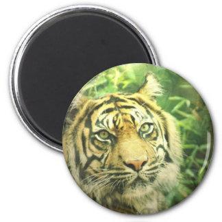 Siberian Tiger Magnet