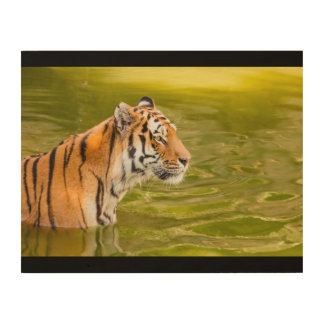 SIBERIAN TIGER ON WOOD WALL ART