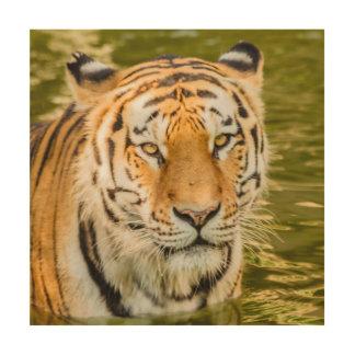 SIBERIAN TIGER  ON WOOD WALL ART