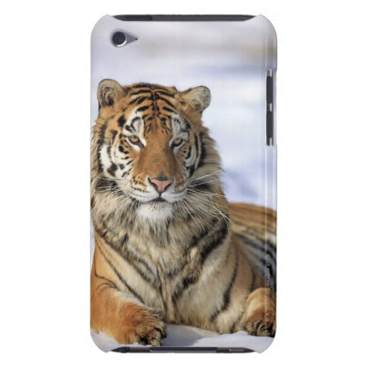 Siberian Tiger, Panthera tigris altaica, Asia Case-Mate iPod Touch Case