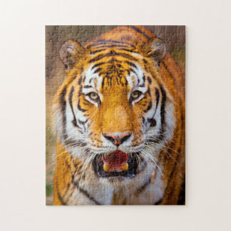 Siberian Tiger Puzzle