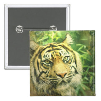 Siberian Tiger Square Pin
