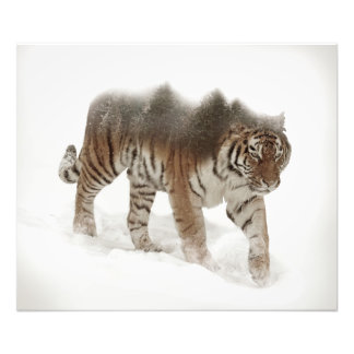 Siberian tiger-Tiger-double exposure-wildlife Photo Print
