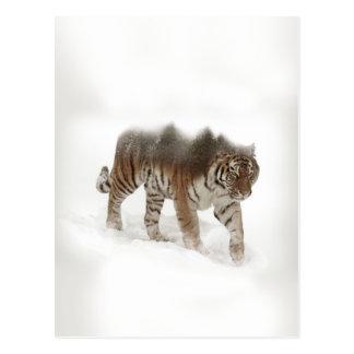 Siberian tiger-Tiger-double exposure-wildlife Postcard