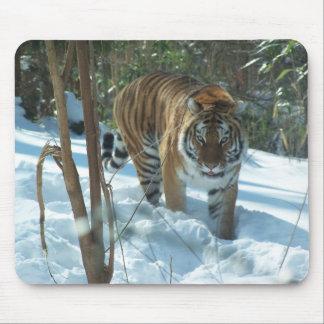 Siberian Tiger Walking In Snow Mousepad