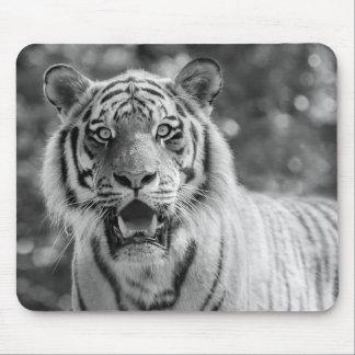 Sibirian Tiger Mouse Pad
