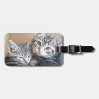 Sibling Kitties Luggage Tag