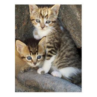 Siblings Postcard