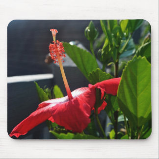 Side Shot of a Hibiscus Mousepad