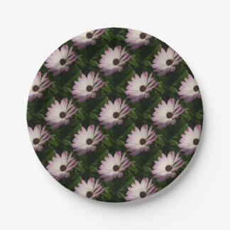 Side View of A Pink and White Osteospermum 7 Inch Paper Plate