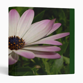 Side View of A Pink and White Osteospermum Binders
