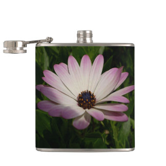 Side View of A Pink and White Osteospermum Hip Flask